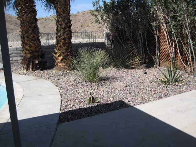 Easy care desertscape back yard
